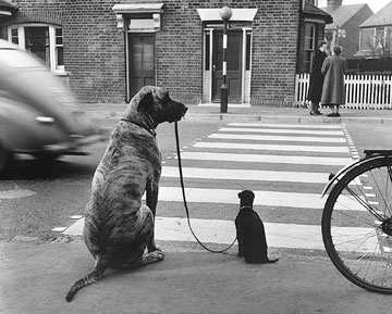 Chiens, Angleterre